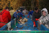 Sorting of fishes sortiranje rib_MG_7905-1.jpg