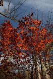 Autumn jesen_MG_7981-1.jpg