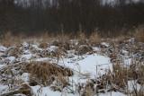 Winter_MG_3601-1.jpg