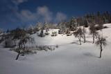 Winter in orchard zima v sadovnjaku_MG_6361-1.jpg