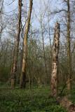 Floodplain forest poplavni gozd_MG_6426-1.jpg