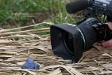 Moor frog Rana arvalis  and film camera plavèek in kamera_MG_6345-1.jpg