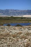 Wetland blato Rogoza_MG_4855-1.jpg