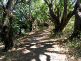 the trails through Charco Verde nature reserve are an easy walk