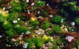 Green Algae.jpg