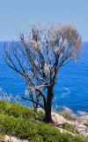 Flaming Tree.jpg