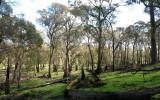 Charred trees.jpg