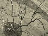 Tree abstract.jpg