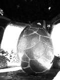 Universal Egg.jpg