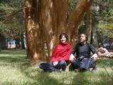 Bosque de Arrayanes, en Villa la Angostura