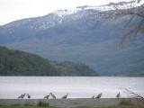 Ibis birds at lake Nonthué
