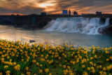 Dawn and daffodils at Niagara Falls