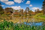 Reeds, lake & folly, Kingston Maurwood