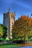All Saints tower and tree, Martock