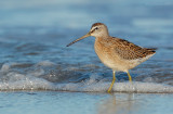 _JFF2204 Dowitcher in Surf.jpg