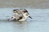 _JFF01131 Sanderling Bathing Sand Flat Pool.jpg