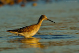 _JFF2276 Yellow Legs Feeding Bay Side.jpg