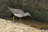 _JFF4505 Yellow Legs Feeding Jetty Base.jpg