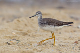 _JFF4554 Yellow Legs on Sand.jpg