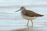 _JFF4575 Yellow Legs Ocean Side.jpg