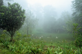 Cloudforest Nikon FE2