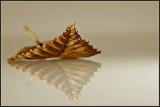 Dry old leaf (Challenge: Flora)