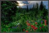 Mother Nature's Garden