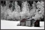 Winter's Icy Grip