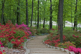 US National Arboretum, Azalea Collections