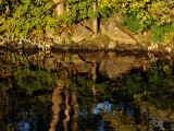 C&O Canal reflections