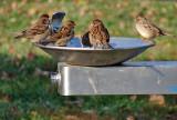 Urban birdbath