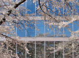 Spring Reflected (6th place, Peaceful Challenge)