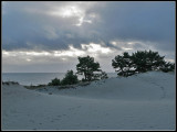 Dark dunes by the Baltic.jpg