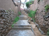 sidewalk by my place after the rain