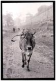 Agra Mist