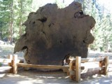 A slab O tree.jpg