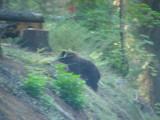 Bear #2-11.jpg