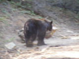 Bear #2-12.jpg