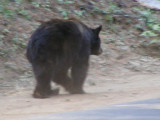 Bear #2-13.jpg