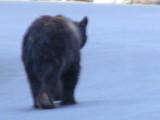 Bear #2-14.jpg