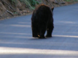 Bear #2-15.jpg