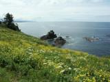 Oregon Coastal