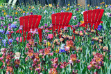 Red Chairs and Irises