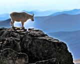 High Rockies Sentinel