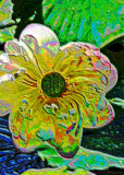Lotus Blossom-Psychedelic