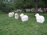 Sculptured sheep
