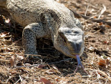Reptiles of Southern Africa