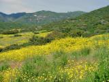 Wildflowers, Kings Canyon NP