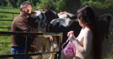 Cet agriculteur n'a pas l'habitude de trouver une modèle nue au milieu de son troupeau de vaches!