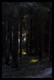 November woods.jpg